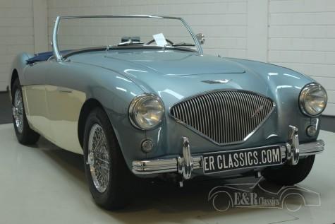 Austin-Healey 100-4 BN1 1954  kopen