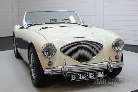 Austin Healey 100-4 BN2 1956  kopen