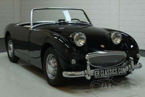 Austin Healey Sprite MK1 1959 kopen