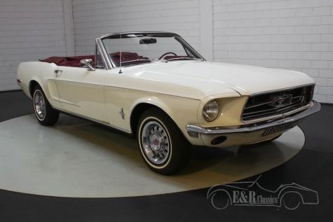 Ford Mustang Cabriolet kopen
