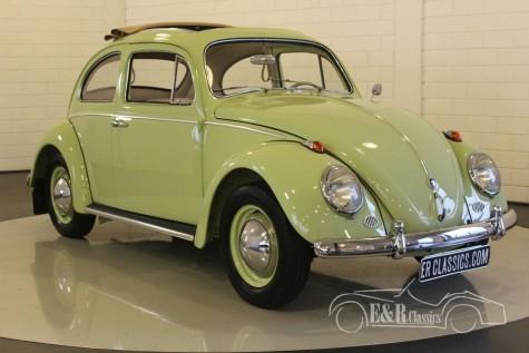 VW Beetle 1961  kopen