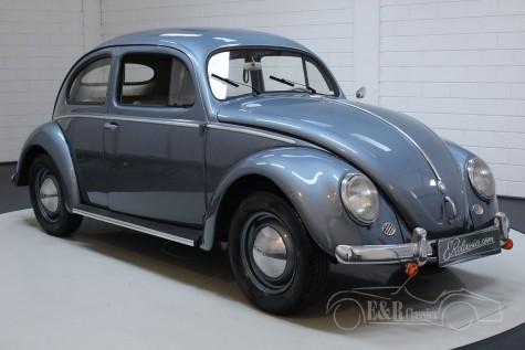 Volkswagen Beetle Oval 1955 kopen