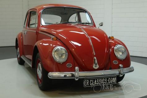 Volkswagen Kever 1966  kopen
