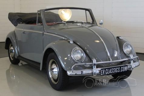 Volkswagen Beetle Cabriolet 1963 kopen